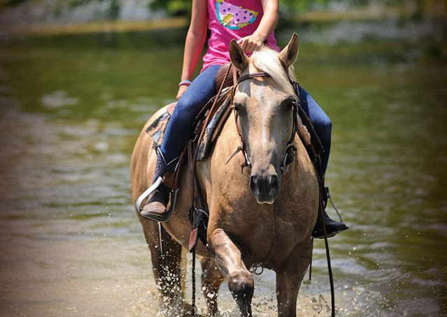 023-Sol-AQHA-Palomino-Gelding-Palo-Duro-Cat-For-Sale