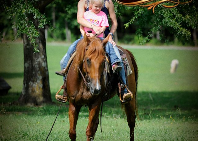 023-Timber-AQHA-Chestnut-Gelding-For-Sale