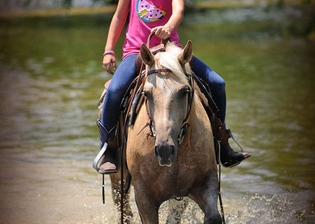 024-Sol-AQHA-Palomino-Gelding-Palo-Duro-Cat-For-Sale