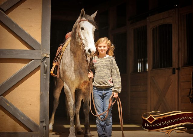 027-Bugsy-Grey-AQHA-Gelding-For-Sale
