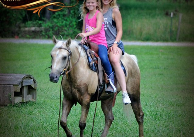 027-Sol-AQHA-Palomino-Gelding-Palo-Duro-Cat-For-Sale