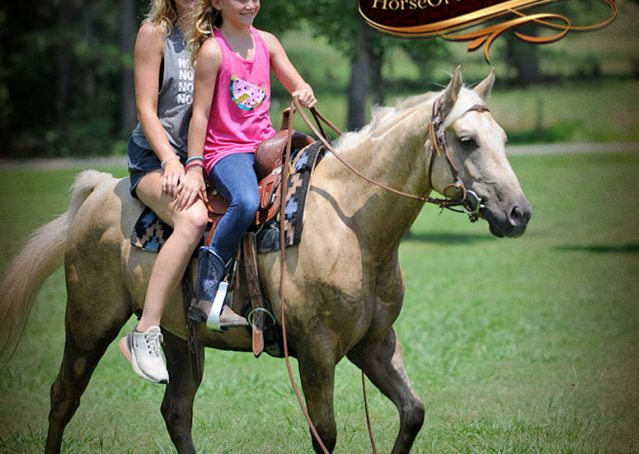 028-Sol-AQHA-Palomino-Gelding-Palo-Duro-Cat-For-Sale