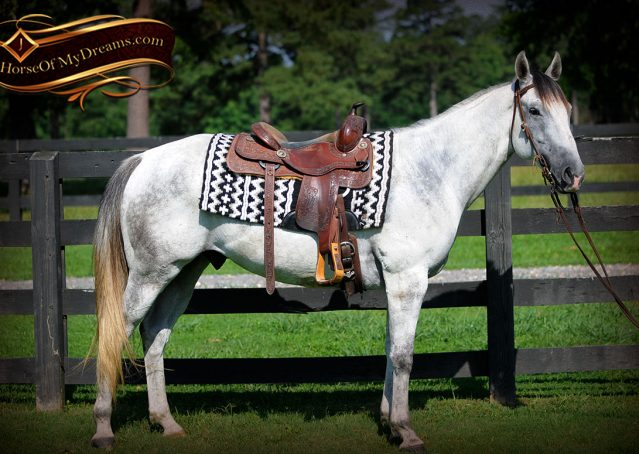 001-Berny-Gray-AQHA-Gelding-For-Sale