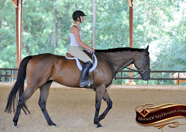 012-Marlin-Bay-thoroughbred-gelding-for-sale