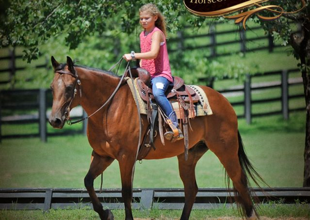 001-Cash-Bay-AQHA-Gelding-For-Sale
