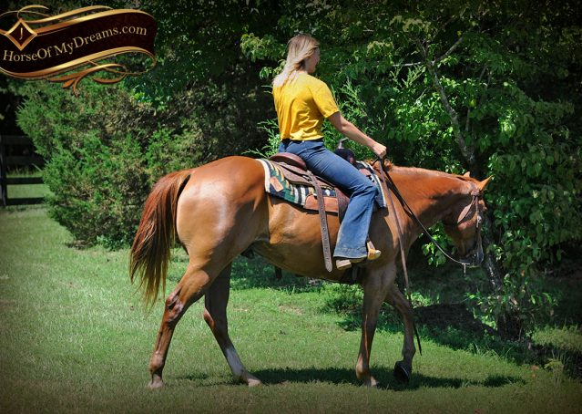 001-Ray-AQHA-Sorrel-Doc-O'lena-gelding-for-sale