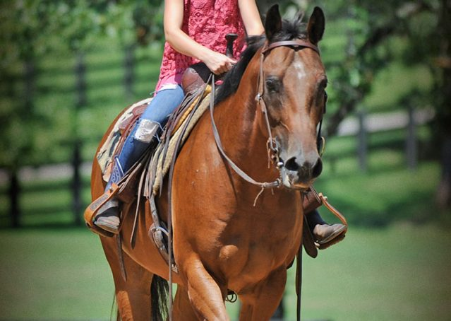 002-Cash-Bay-AQHA-Gelding-For-Sale