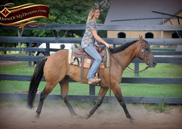 002-Dakota-Buckskin-Dun-Quarter-Horse-Gelding-For-Sale-Beginner-KIds-Family-ranch-bombproof