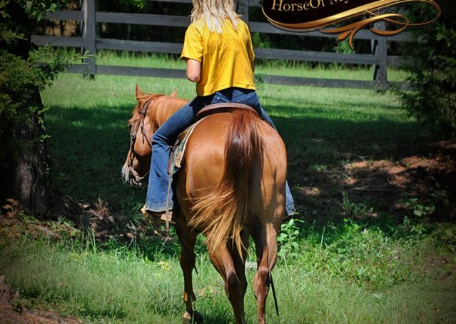 002-Ray-AQHA-Sorrel-Doc-O'lena-gelding-for-sale