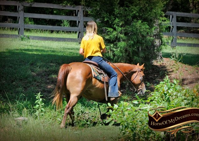 003-Ray-AQHA-Sorrel-Doc-O'lena-gelding-for-sale