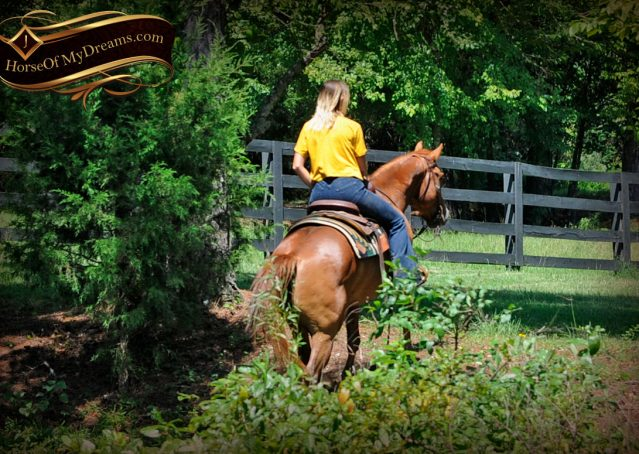 004-Ray-AQHA-Sorrel-Doc-O'lena-gelding-for-sale