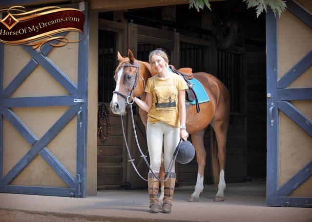 005-Jackson-Chestnut-thoroughbred-gelding-for-sale