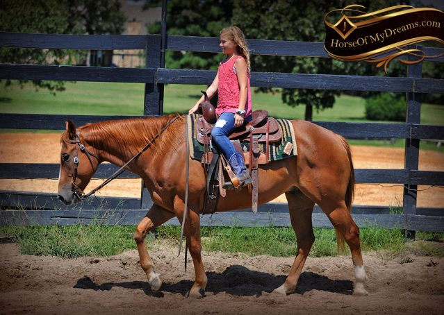 005-Ray-AQHA-Sorrel-Doc-O'lena-gelding-for-sale