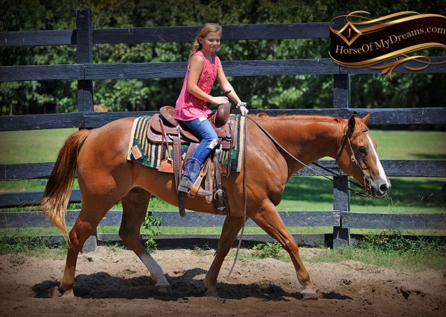 006-Ray-AQHA-Sorrel-Doc-O'lena-gelding-for-sale