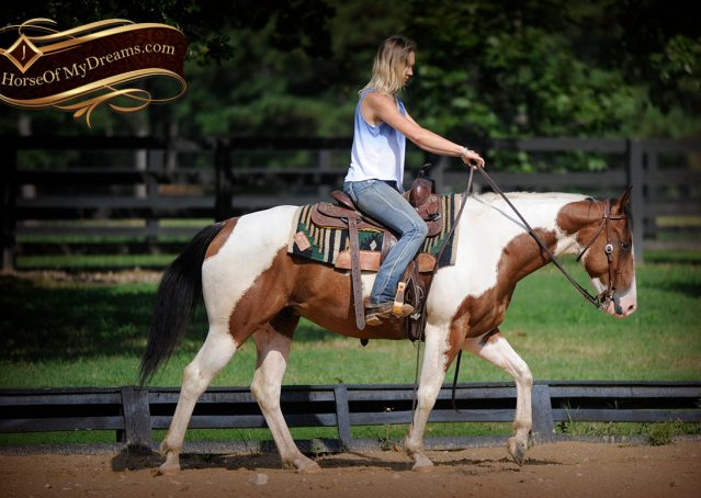 007-Cutter-Bay-White-APHA-Gelding-For-Sale