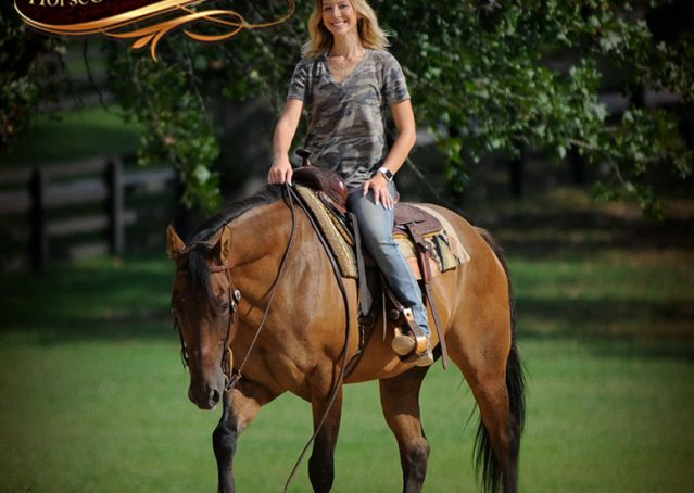 007-Dakota-Buckskin-Dun-Quarter-Horse-Gelding-For-Sale-Beginner-KIds-Family-ranch-bombproof