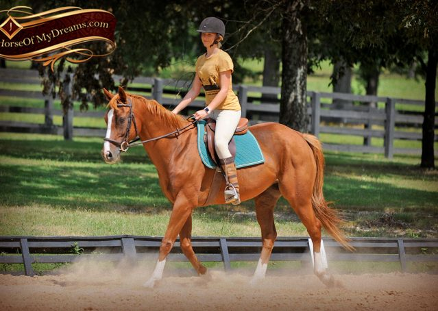 007-Jackson-Chestnut-thoroughbred-gelding-for-sale