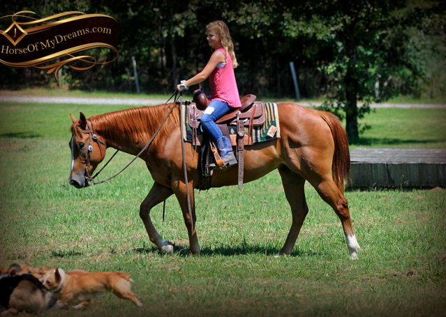 007-Ray-AQHA-Sorrel-Doc-O'lena-gelding-for-sale