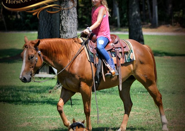 008-Ray-AQHA-Sorrel-Doc-O'lena-gelding-for-sale