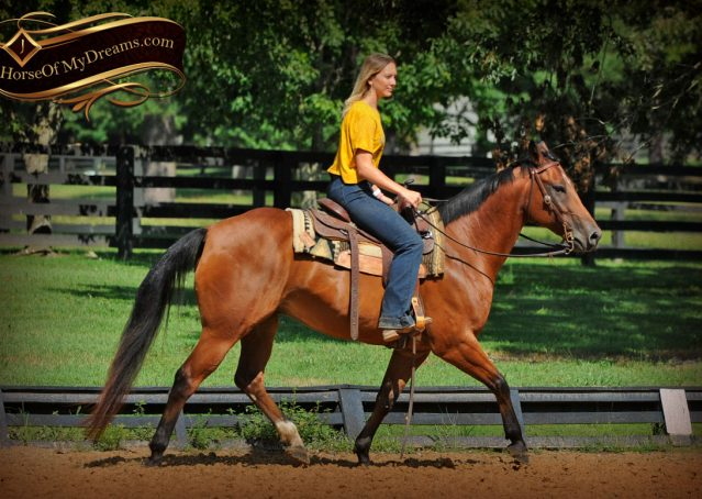 009-Cash-Bay-AQHA-Gelding-For-Sale