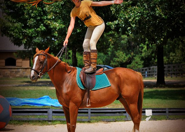 009-Jackson-Chestnut-thoroughbred-gelding-for-sale