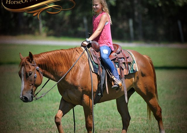009-Ray-AQHA-Sorrel-Doc-O'lena-gelding-for-sale