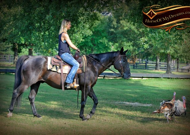 010-Espresso-Black-Quarter-Horse-Gelding-For-Sale