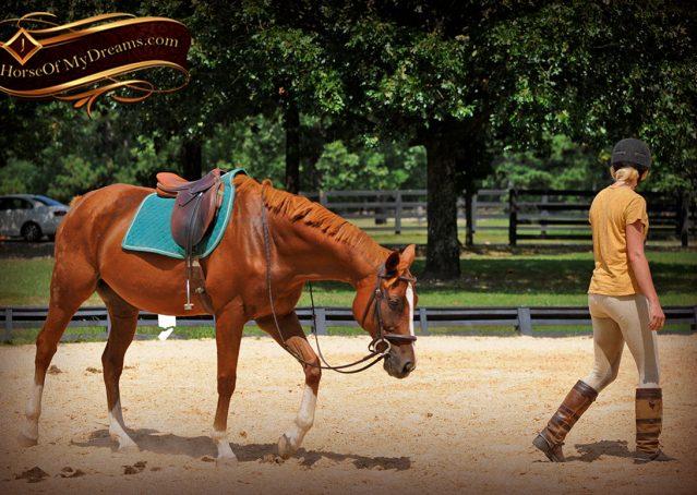 010-Jackson-Chestnut-thoroughbred-gelding-for-sale