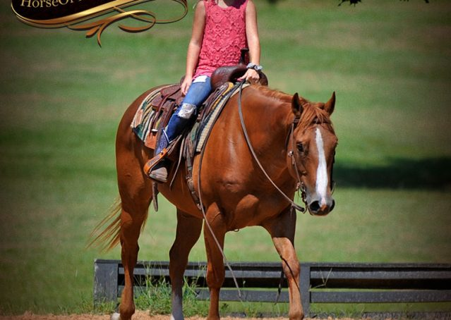 010-Ray-AQHA-Sorrel-Doc-O'lena-gelding-for-sale