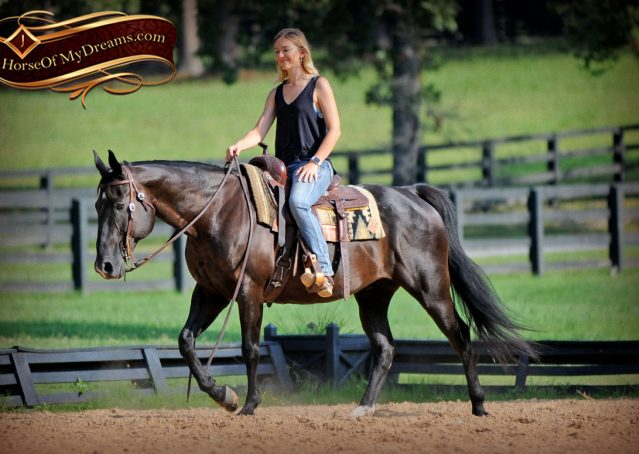 011-Espresso-Black-Quarter-Horse-Gelding-For-Sale