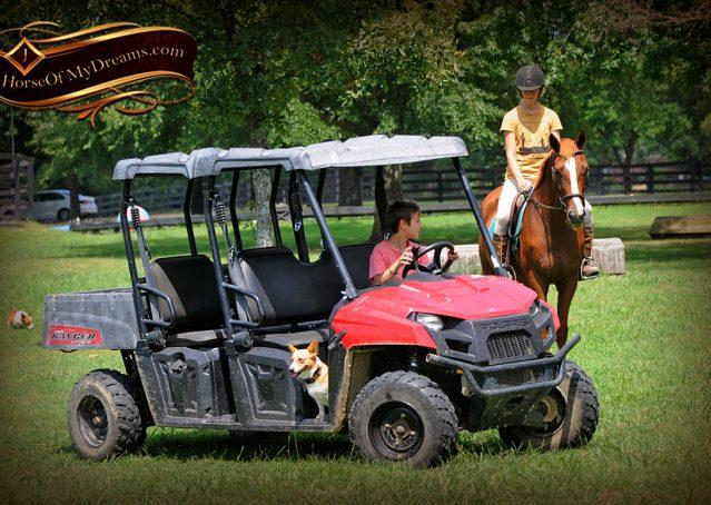 012-Jackson-Chestnut-thoroughbred-gelding-for-sale