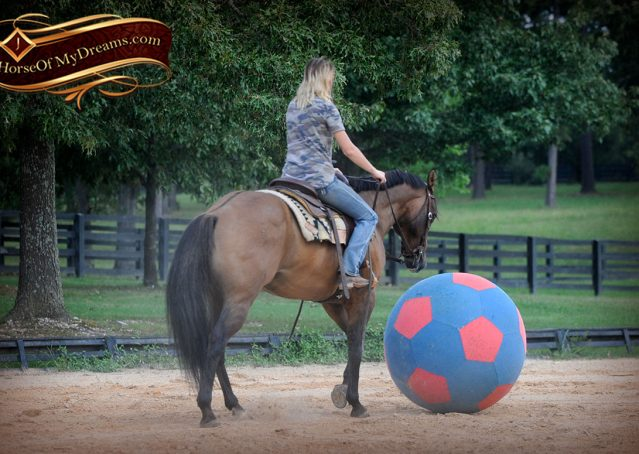 013-Dakota-Buckskin-Dun-Quarter-Horse-Gelding-For-Sale-Beginner-KIds-Family-ranch-bombproof