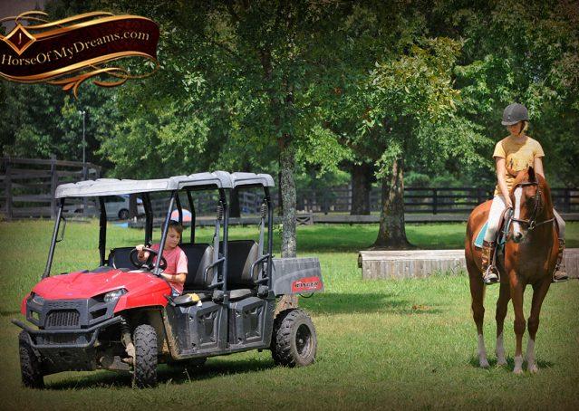013-Jackson-Chestnut-thoroughbred-gelding-for-sale