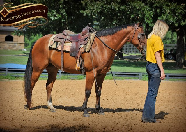 014-Cash-Bay-AQHA-Gelding-For-Sale