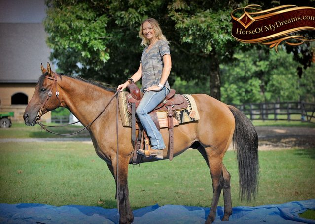 014-Dakota-Buckskin-Dun-Quarter-Horse-Gelding-For-Sale-Beginner-KIds-Family-ranch-bombproof