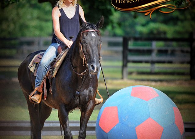 014-Espresso-Black-Quarter-Horse-Gelding-For-Sale