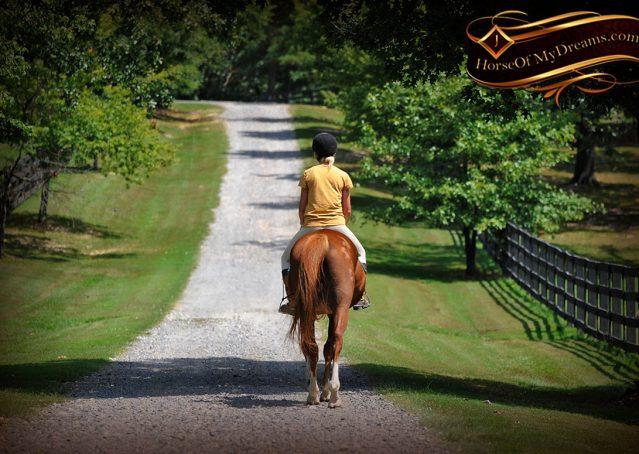 015-Jackson-Chestnut-thoroughbred-gelding-for-sale