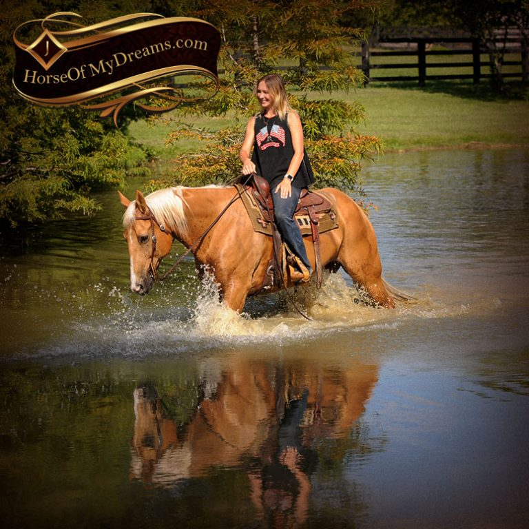 Horse Of My Dreams |
