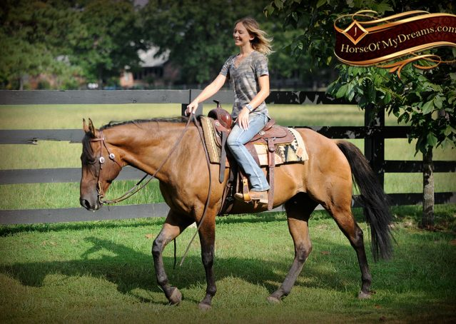 017-Dakota-Buckskin-Dun-Quarter-Horse-Gelding-For-Sale-Beginner-KIds-Family-ranch-bombproof