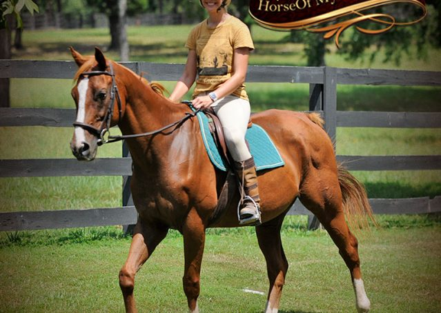 017-Jackson-Chestnut-thoroughbred-gelding-for-sale
