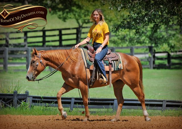 017-Ray-AQHA-Sorrel-Doc-O'lena-gelding-for-sale