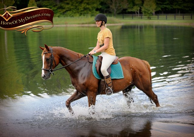 018-Jackson-Chestnut-thoroughbred-gelding-for-sale