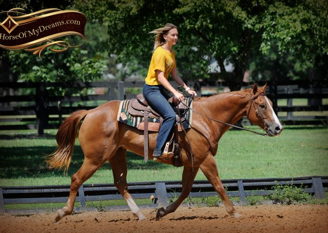 018-Ray-AQHA-Sorrel-Doc-O'lena-gelding-for-sale