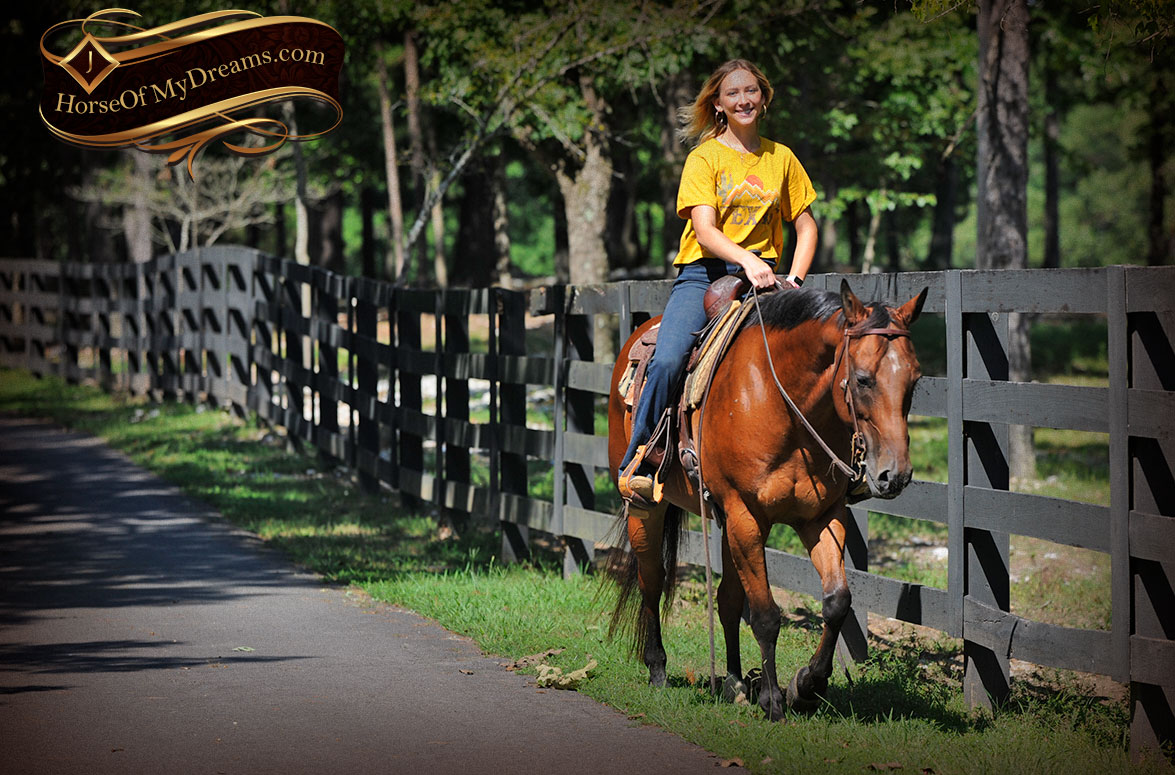 Horses for Sale | Horse of My Dreams