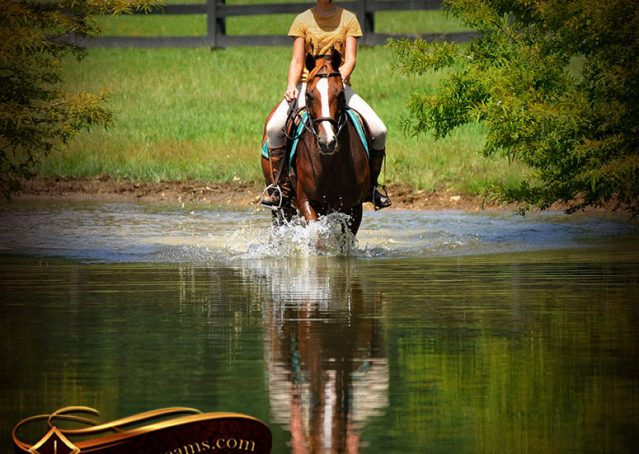019-Jackson-Chestnut-thoroughbred-gelding-for-sale