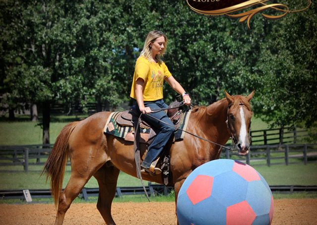 019-Ray-AQHA-Sorrel-Doc-O'lena-gelding-for-sale
