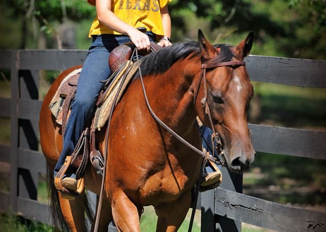 020-Cash-Bay-AQHA-Gelding-For-Sale