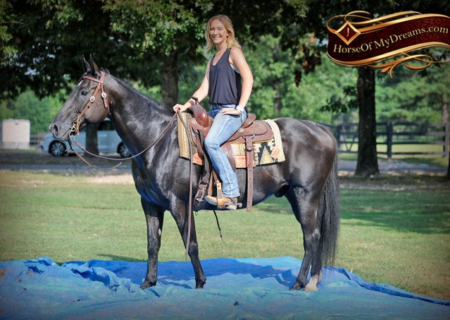 020-Espresso-Black-Quarter-Horse-Gelding-For-Sale
