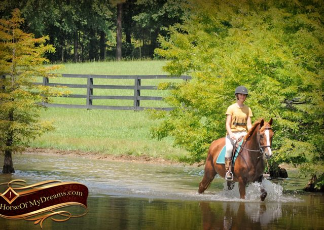 020-Jackson-Chestnut-thoroughbred-gelding-for-sale