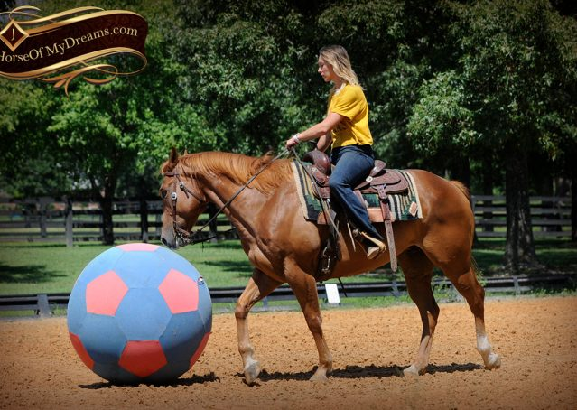 020-Ray-AQHA-Sorrel-Doc-O'lena-gelding-for-sale